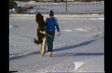 Husdjur - Vimeo thumbnail