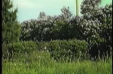 Blomster på äng och i trädgård-1983 - Vimeo thumbnail